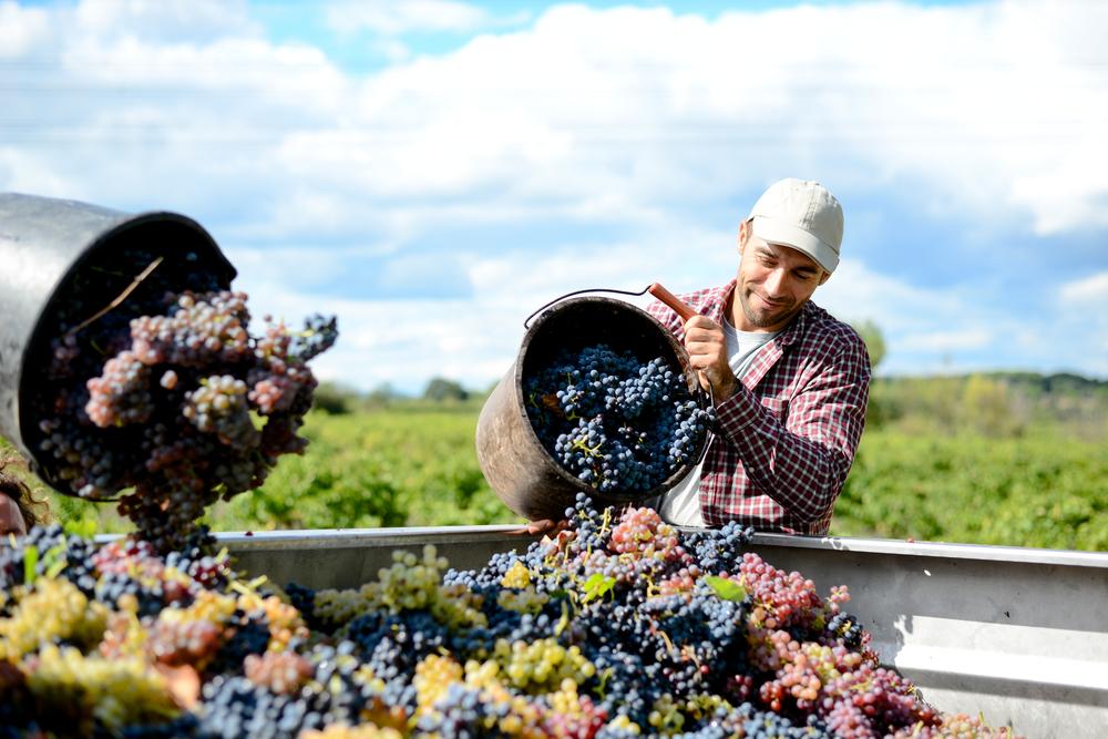 vine maker